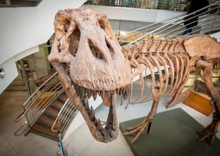 La Tierra albergó 2,500 millones de Tiranosaurios Rex en su historia