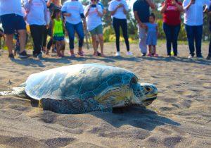 El compromiso de Nuvoil para salvar de la extinción a la tortuga verde marina