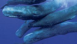 Las ballenas son como nosotros
