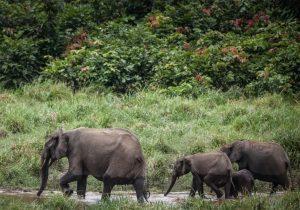 Elefante embosca a un cazador y lo pisotea hasta matarlo