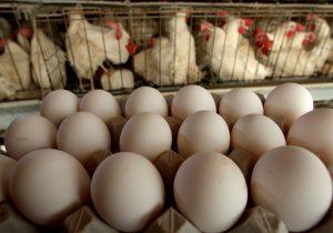 Director divulga que los huevos se pueden empollar con la mente; su escuela ya fue cerrada