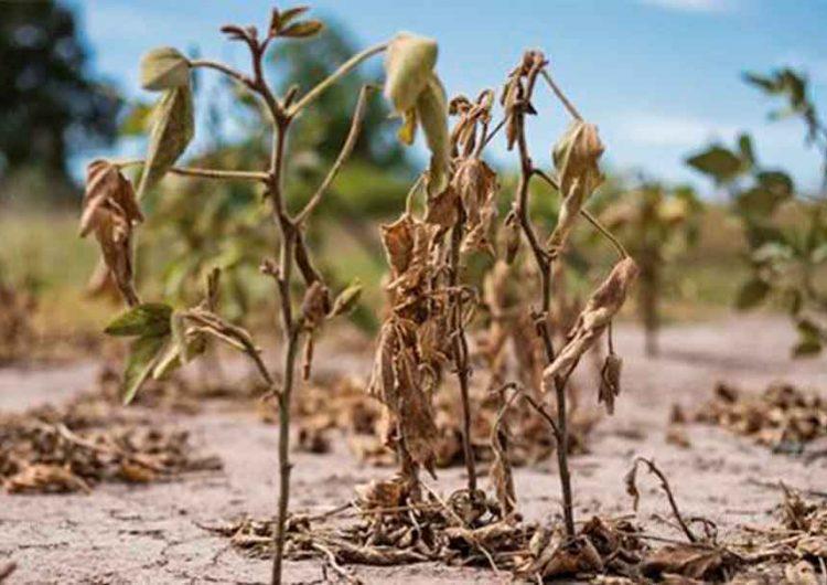 Sequía golpea bolsillo de consumidores; a la alza carne, cítricos y granos