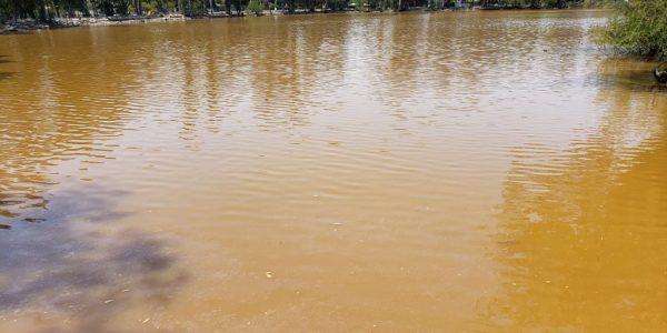 Denunciará CESPT a empresas que contaminaron lago de parque de La Amistad