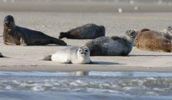 Rusia: 170 focas muertas son encontradas a orillas del mar…