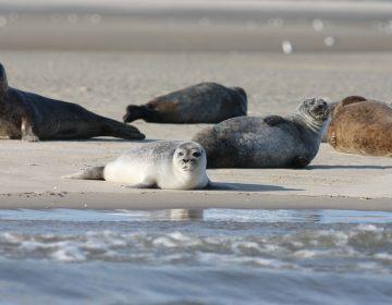 Rusia: 170 focas muertas son encontradas a orillas del mar Caspio