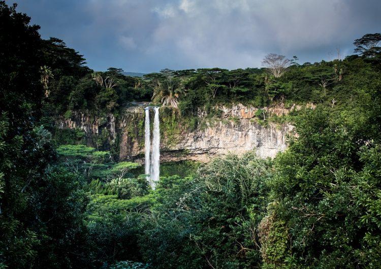 Las selvas africanas siguen frenando el cambio climático