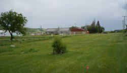 Hallan más de 750 tumbas cerca de antigua escuela indígena…