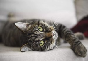 Familia crema a su gato atropellado; el animal vuelve a casa días después