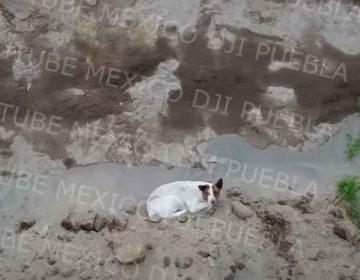Otro 'lomito' cae en socavón de Puebla