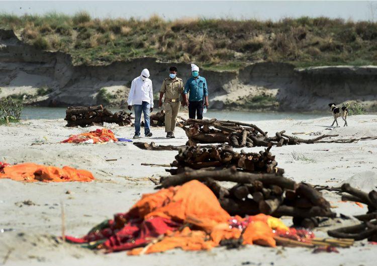 India: perros callejeros comen cadáveres de personas presuntamente fallecidas por covid-19