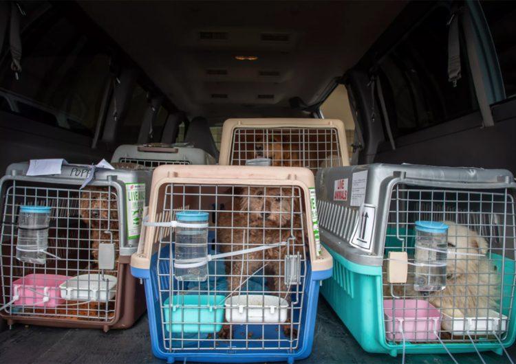 Perros de más de 100 países tienen prohibido entrar en EU durante un año