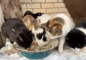 Más de 60 gatos maltratados, 10 de ellos muertos, son recuperados de casa de 'rescatista'