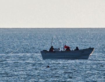 México anuncia nuevos restricciones de pesca para proteger el hábitat de la vaquita marina