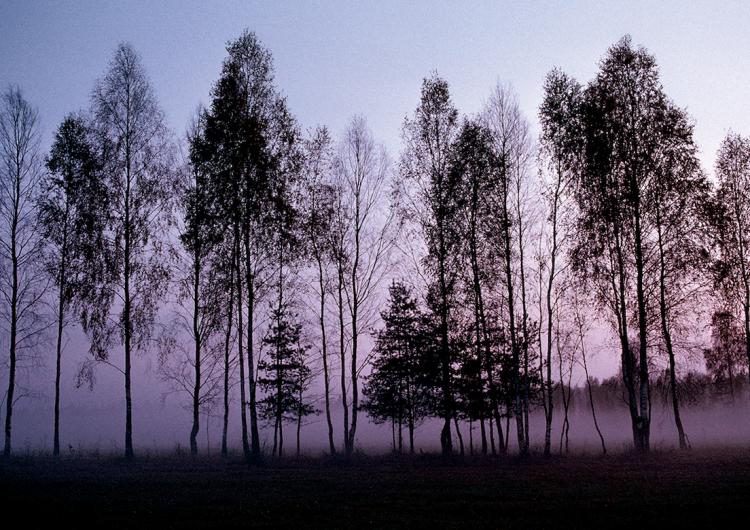 Salvar el silencio: los lugares más silenciosos del mundo