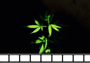 Cannabis: una dignificación desde el cine