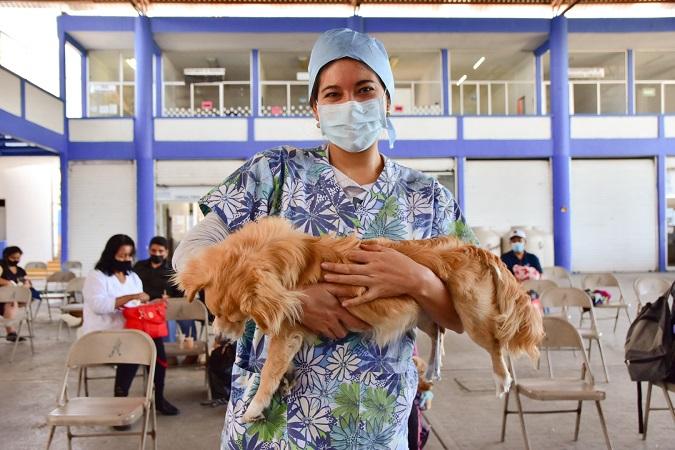 Del 19 al 23 de julio, jornada de esterilización de mascotas en Aguascalientes