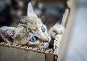 ¿Los gatos aman la noche? Sí, pero más el amanecer y el atardecer