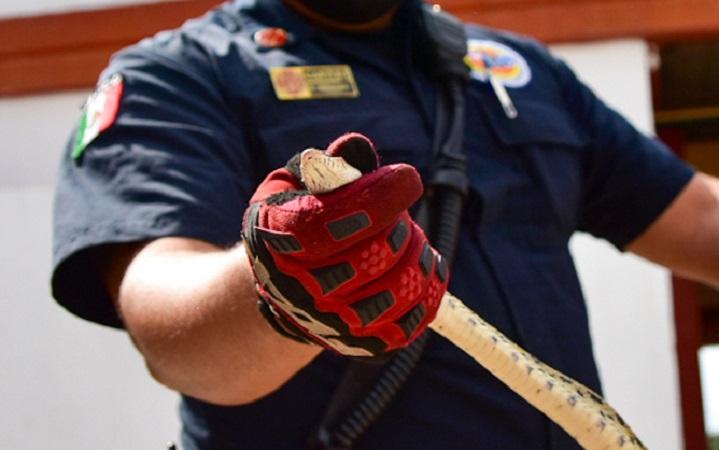 Rescata Protección Civil seis serpientes en casas habitación y calles de Aguascalientes