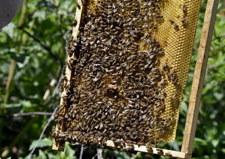 Exposición a agroquímicos aumenta netamente la mortalidad de las abejas: estudio