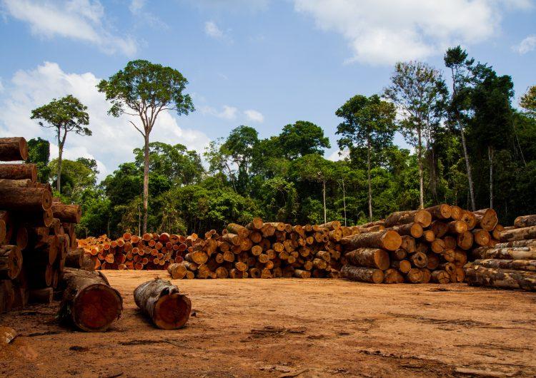 Indígenas aislados en el Amazonas, en 'riesgo' por el tráfico ilegal de madera: Survival International
