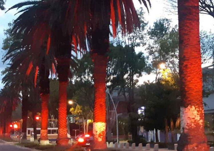 En Puebla se impedirá la tala de palmeras en Analco y avenida Juárez