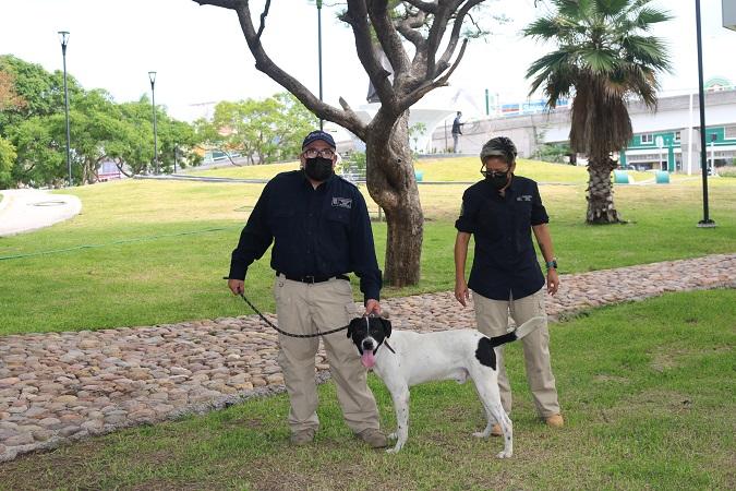 Entrega PROESPA perro maltratado que fue rescatado en el Anexo Palomino