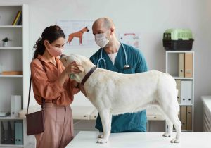 Enfermedades humanas provenientes de animales van en aumento: expertos