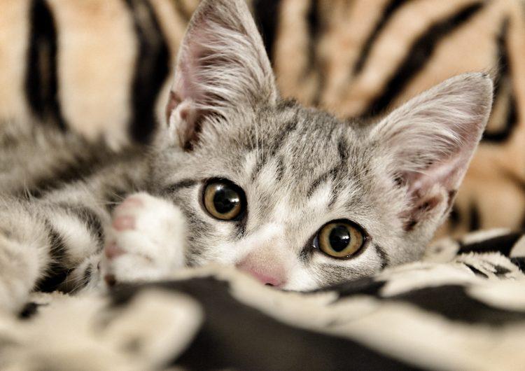 CDMX: así pueden obtener las mascotas un RegistroÚnico De Animales De Compañía