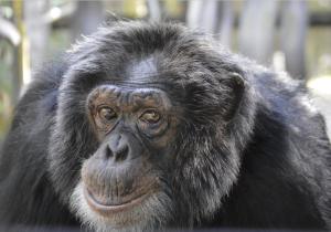 Un grupo de gorilas del zoológico de Atlanta da positivo a covid-19