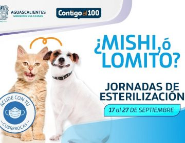 Realizará ISSEA jornada de esterilización de mascotas en Aguascalientes, Pabellón y Tepezalá