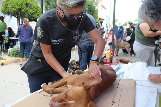 Inicia PROESPA caravana de salud canina y felina en Calvillito