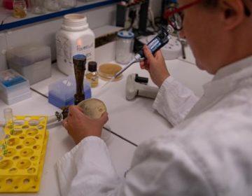 Vacunas vía intranasal, un nuevo método para combatir el covid-19