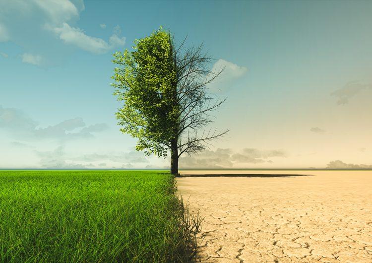 La doble moral del mundo frente a la humildad del planeta