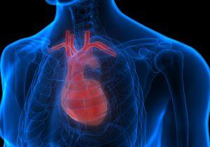¿Cómo influye el corazón en las buenas decisiones?