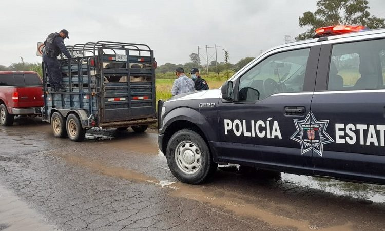 Disminuye 90% robo de ganado en Aguascalientes tras operativos de la SSPE