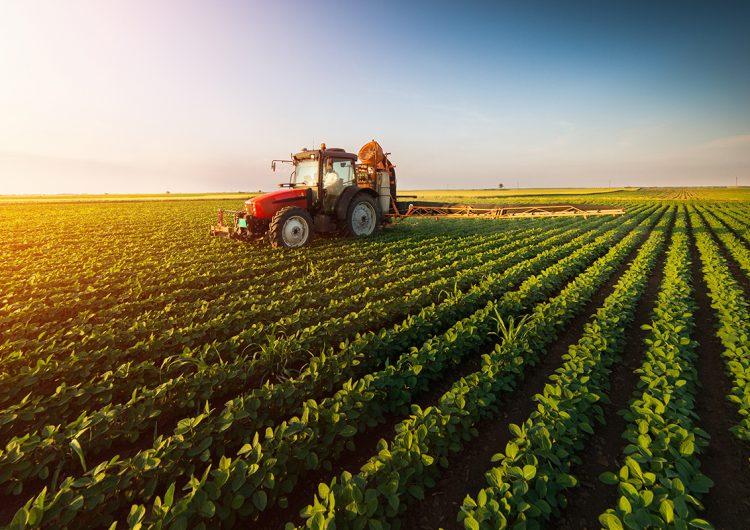 La agricultura sostenible es clave para brindar seguridad alimentaria