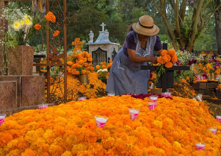 Flor de cempasúchil: un símbolo del Día de Muertos muy mexicano