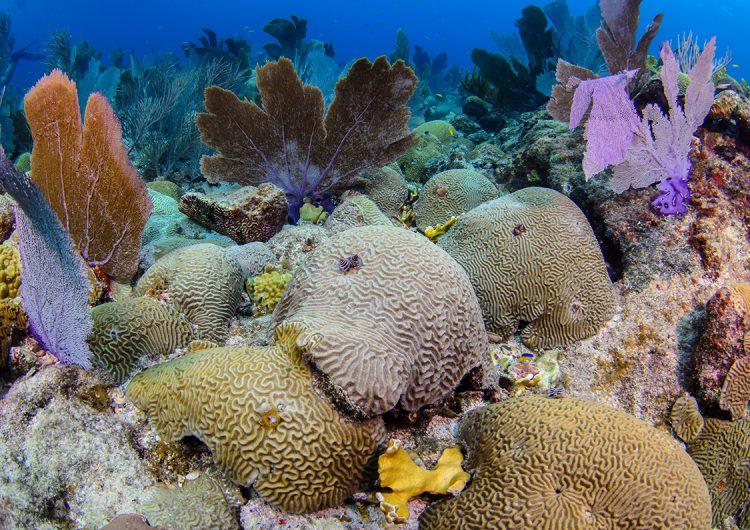 Pesca ilegal y turismo excesivo: el reto de conservar un Área Natural Protegida en México