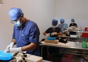 Anuncia ISSEA nueva jornada de esterilización felina y canina en Aguascalientes