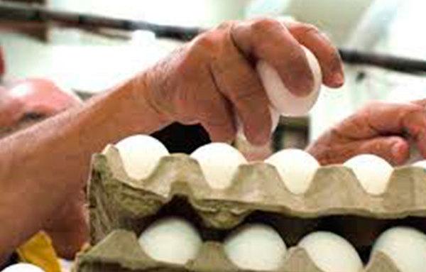Les dan pollos en Tizayuca para que se autoempleen