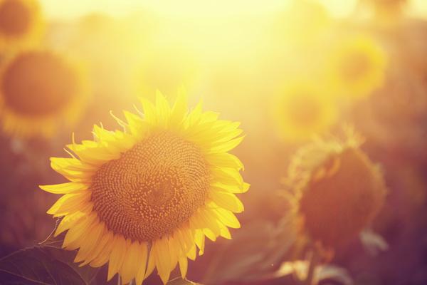 Cambio climático: solo el sol nos salvará