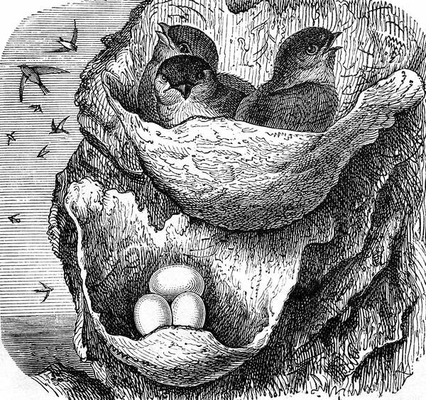 Puentes de acero y nidos de saliva