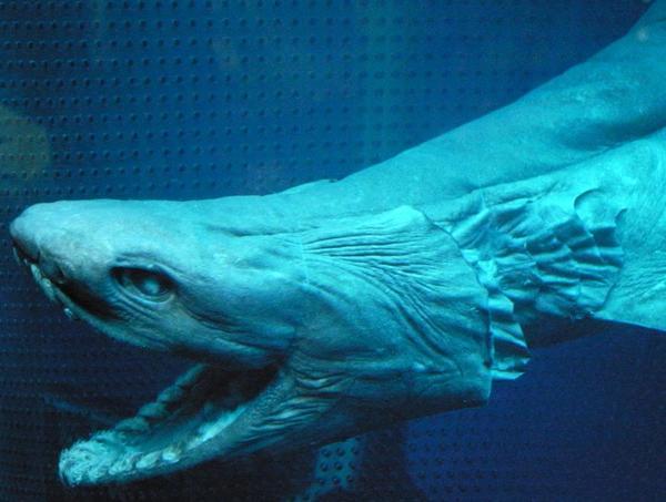 """Encuentran tiburón """"prehistórico"""""""