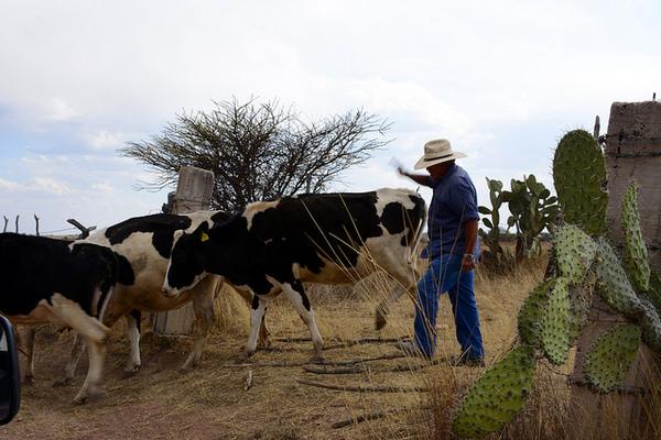 Traba secadora de leche falta de recursos