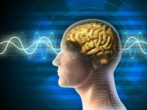 La realidad la crea el cerebro para sobrevivir