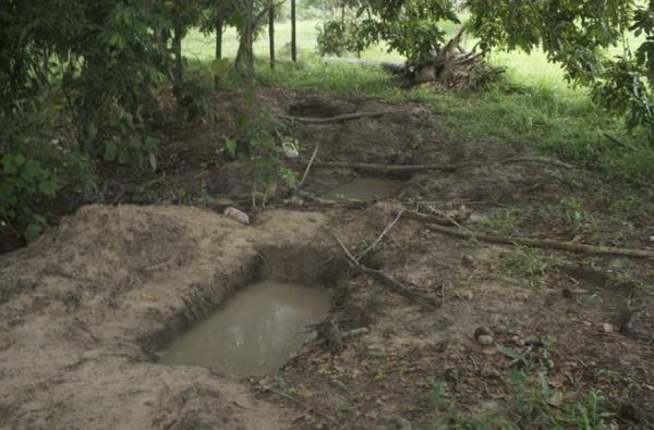 Hallan cadáveres de 50 perros en fosa clandestina en Puebla