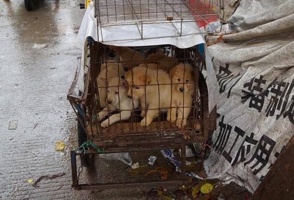 Pandilla china vendía jeringas envenenadas para matar a perros y obtener carne