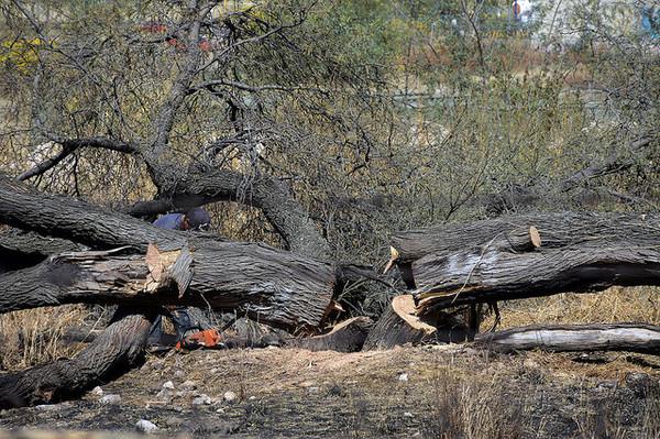 Revisará Tribunal Federal 'perdón' a Semarnat por ecocidio