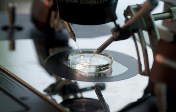 Científicos editan embriones humanos para eliminar enfermedades