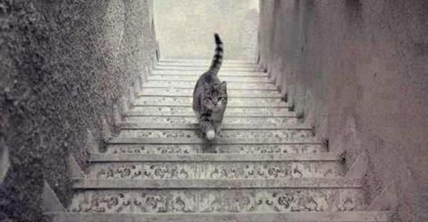 ¿Sube o baja? Un gato desata polémica en redes sociales